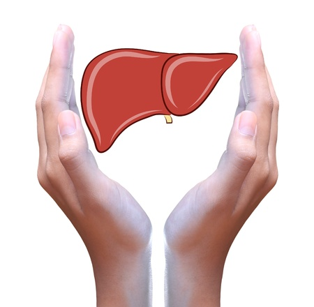 human liver: liver in hand