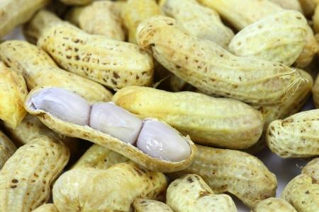 arachis: Boiled peanut Stock Photo