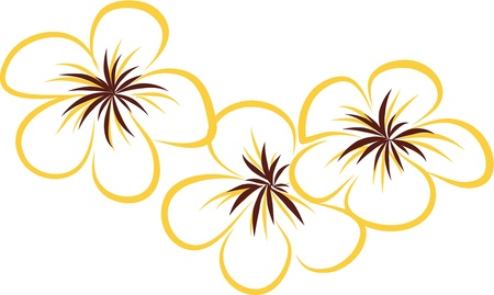 drawing Tropical Plumeria Flowers Vector Illustration