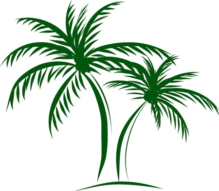 desert island: illustration of isolated palm trees with coconut on white background