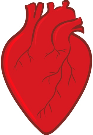 human heart anatomy Stock Vector - 21570678