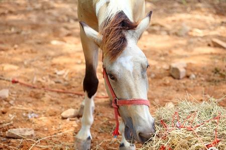 haymow: brown  horse eating hay