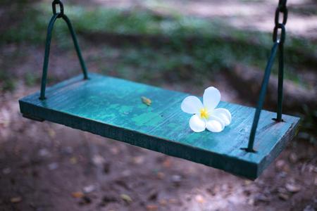 Plumeria op houten schommel in de tuin Stockfoto