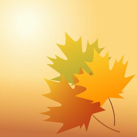 autumn scene: Autumnal leaf of maple and sunlight  vector illustrator