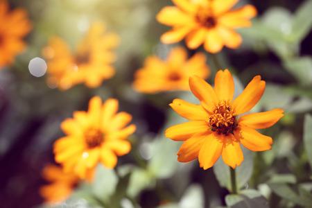 yellow vintage flower background