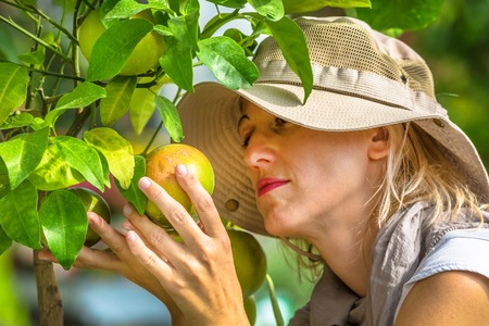 Farmer controlling grapefruits on the tree. Concepts of sustainable living, outdoor work , contact with nature, healthy food.