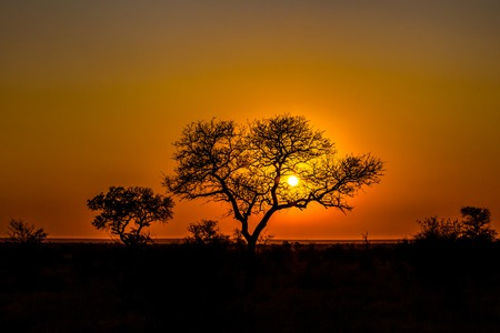 Beautiful african landscape at sunset with branches of trees in the background. Isimangaliso Wetland Park, KwaZulu-Natal, South Africa. Stock Photo