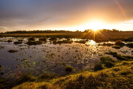 wetlands: Sunset in the lake with water lilies iSimangaliso Wetland Park KwaZulu Natal South Africa.