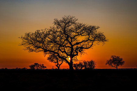 africa sunset: Beautiful African landscape at sunset with branches of trees in the background. Isimangaliso Wetland Park, KwaZulu-Natal, South Africa.