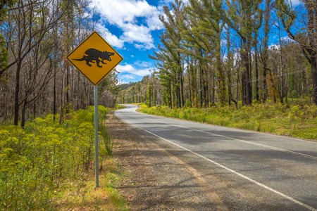 tasman: Warning sign for Tasmanian Devil crossing on Tasman Peninsula road.