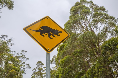 tasman: Closeup of warning sign for Tasmanian Devil crossing on Tasman Peninsula road.