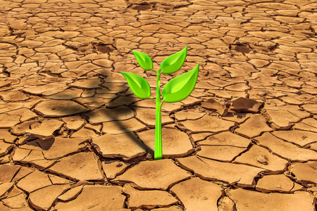 difficult lives: A small green plant is growing from the arid cracked earth. concept of a precious life in a difficult situation, purity concept, survival concept, pollution.