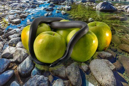 contaminacion del agua: Serpiente negro con manzanas verdes en el suelo de piedra. concepto: la tentaci�n, manzanas envenenadas, tierra veneno, la contaminaci�n y la contaminaci�n, la contaminaci�n de las aguas subterr�neas, la contaminaci�n del agua. Foto de archivo