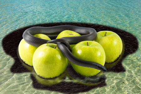 waste products: Black snake on apples in tropical sea with oil stain around. Concept: poisoned sea, pollution,contamination,man poisoning the environment,  polluted dirty sea, chemicals discharges,