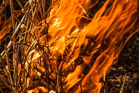 Close-up of an infernal forest fire that destroys an entire area of trees and bush.