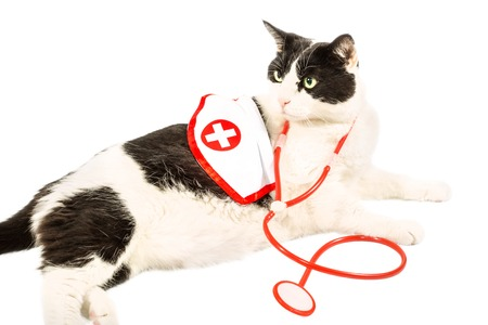 red stethoscope: Black and white cat in doctor uniform with red stethoscope and red cross coat. On pure white . Stock Photo
