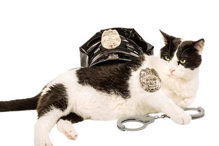 Gatto poliziotto in bianco e nero in uniforme della polizia con cappello, distintivo e manette. Su bianco puro Archivio Fotografico - 43611812