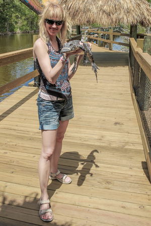 Everglades national park: Blonde and smiling tourist woman is holding a small alligator, Everglades National Park, Florida, USA.