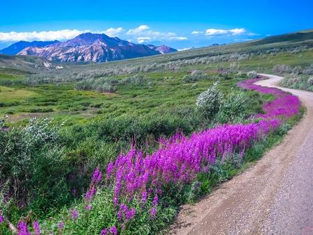 셔틀 버스, 공원 내부에 자갈 도로를 만들 수 있습니다 수송의 유일한 수단에서 본 아름다운 풍경입니다. 여름에 다 국립 공원, 알래스카, 미국.