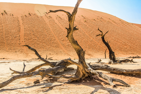 characterized: Deadvlei or Dead Vlei , a depression characterized by a layer of white sand located about 2 km by road from Sossusvlei. Namib-Naukluft National Park, Namibia.