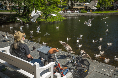 voracious: Stavanger, Norway - June 16, 2014: A homeless man sitting on the bench with an old bicycle alongside watch seagulls eat, in front of the Cathedral. Editorial