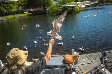 voracious: Stavanger, Norway - June 16, 2014: Homeless feeding the seagulls sitting on a bench in front of the Cathedral. Editorial