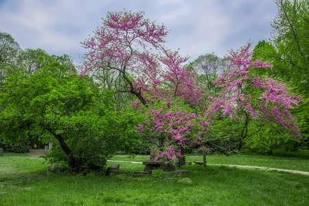 talon: Springtime in the Talon park , Chiusa park in Italy