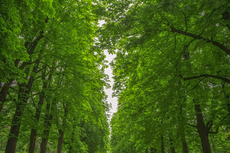 leafy: Background of leafy green trees in Talon Park in Italy.