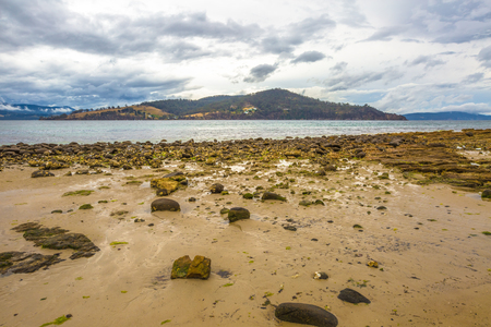 uncovering: The beach at Dennes Point Bruny Island Tasmania Ausytralia at low tide uncovering the young mussels growing on the rocks.