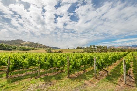 vi�edo: vi�edo colorido del paisaje en la zona comprendida entre Richmond, Cambridge y Hobart, en Tasmania, Australia. Foto de archivo