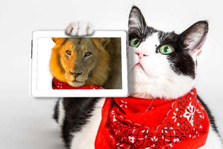 red bandana: Brave cat with red bandana, showing a selfie of his real nature. Concept of courage, ambition and overvaluation.