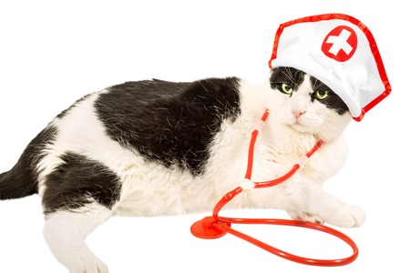 headpiece: Black and white cat in vet uniform with red stethoscope and red cross headpiece. Lying on pure white background.