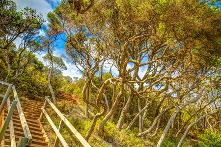 Wooden stairs in the tropical forest to Ben Boyds Tower close to Eden in Merimbula Sapphire Coast,NSW Australia. Tower is located at Red Point, on the southern headland of Twofold Bay. Stock Photo