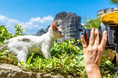 Cerca de una cámara mientras tiro de un dulce gatito blanco, linda que se coloca en la hierba en Monasterios de Meteora, Kalambaka, Grecia central. Foto de archivo