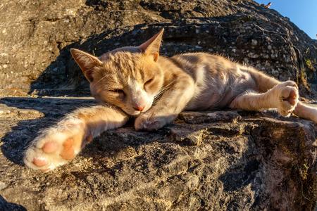 animalitos tiernos: Gato callejero blanco rojo y duerme acostado en roca al aire libre.
