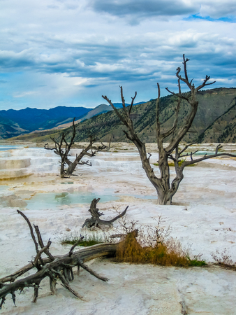 calcium carbonate: Dramatic view of dead trees and travertine terraces rock formations made of crystallized calcium carbonate in Mammoth Hot Springs, Yellowstone National Park in Wyoming and Montana, United States. Stock Photo