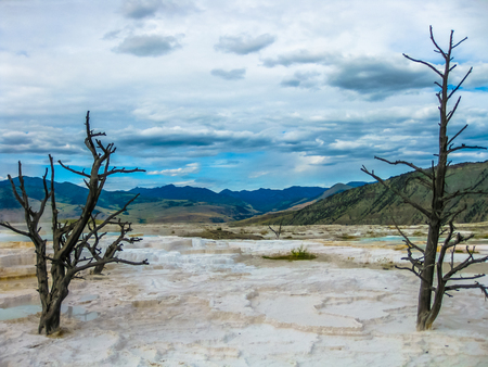 arboles secos: Dramatic view of dead trees and travertine terraces rock formations made of crystallized calcium carbonate in Mammoth Hot Springs, Yellowstone National Park in Wyoming and Montana, United States. Foto de archivo