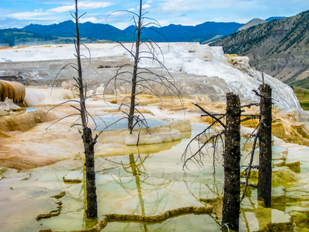 Dramatic view of dead trees and travertine terraces rock formations made of crystallized calcium carbonate in Mammoth Hot Springs, Yellowstone National Park in Wyoming and Montana, United States. Stock fotó