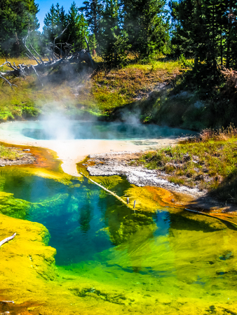 seismograph: Spectacular colorful Seismograph Pool and dead trees in the West Thumb Geyser Basin of Yellowstone National Park, Wyoming, United States. Foto de archivo