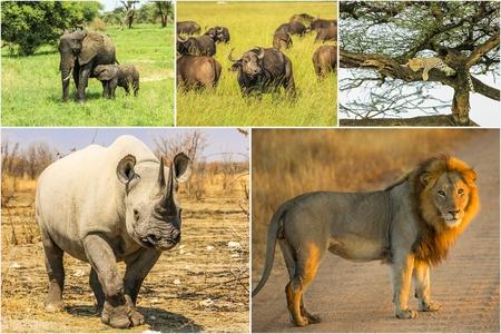 national parks: African Big Five animals collage, Buffalo, Elephant, Leopard, Black Rhino and Lion in national parks and african reserves like Kruger, Etosha and the Serengeti. Stock Photo