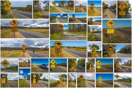 tasmania: Australian road signs collage of kangaroo, koala, wombat, devil and penguin crossing road in Australian States of Victoria, New South Wales and Tasmania.