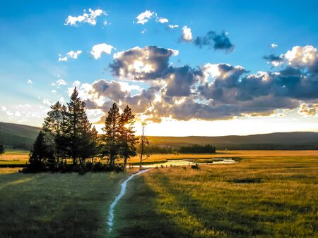 pine trees: Beautiful landscape with pine trees at sunset in Yellowstone National Park, Wyoming, United States.