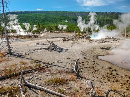 arboles secos: Paisaje de árboles muertos y aguas termales en el Parque Nacional de Yellowstone en Wyoming y Montana, Estados Unidos.