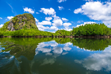 phang nga: Spectacular scenery of mangrove forest reflected in the sea. Phang Nga Bay, Ao Phang Nga National Park, Krabi, Thailand. Stock Photo