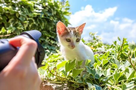 outside machines: Close up of a camera while taking a shot of sweet, adorable little white kitten standing on the grass outdoors.
