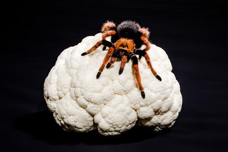 metaphoric: Close-up of metaphoric representation of brain cancer, of dementia, depression, schizophrenia. Tarantula on a cauliflower. Black background.