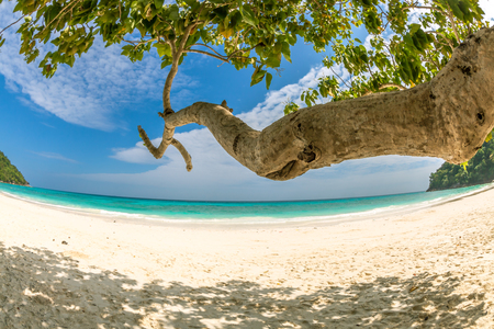 similan islands: Close up of tropical tree on  white beach in summer at the Similan Islands National Park, Phang Nga, Thailand, one of the tourist attraction of Andaman Sea.