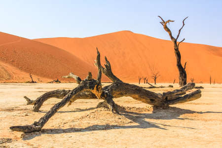 vlei: Deadvlei or Dead Vlei , a depression characterized by a layer of white sand located about 2 km by road from Sossusvlei. Namib-Naukluft National Park, Namibia.