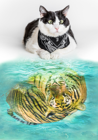 twinning: Cat with black bandana, reflected in a pool of water, seeing a mirrored tiger inside. Concept of courage, potential,threat,fear, dreaming, twinning, ambition and overrating. Stock Photo