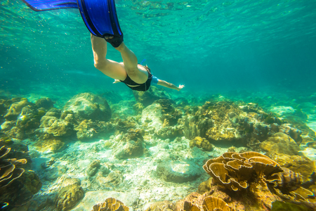 free dive: Young female snorkeling in tropical sea. Woman apnea swims in coral reef. Stock Photo
